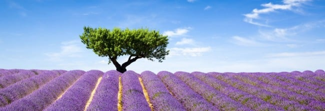 psaume-olivier-verdoyant Psaume 51,1-11 : comme un olivier verdoyant
