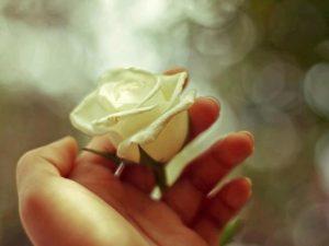 Rose-blanche-main Le Sacré Cœur