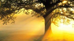 parole-et-lumière PAROLE ET LUMIÈRE