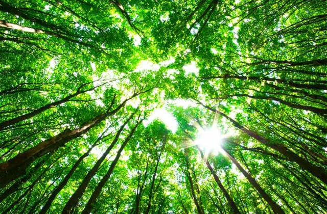 arbredevie En toi est la source de vie.