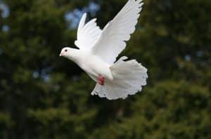 colombe Le symbolisme de l'onction et des vêtements blancs